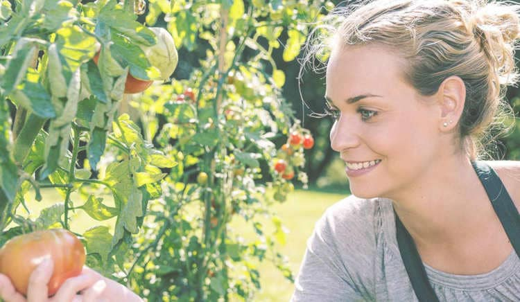 A pretty blond girl examines a tomato in her garden